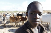 A child stands in front of a herd of cows in Samburu County in Kenya, one of the many tropical countries that would have a larger hit to its overall gross domestic product if the overall global temperature continues to steadily rise. Climate change has le