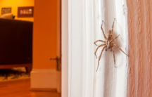 a spider in a home