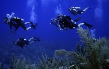 FORCE BLUE divers