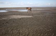 Horse on dry lake