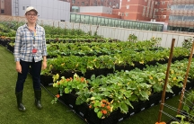 A woman stands next to rows of tidy plants on a rooftop farm