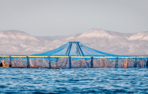 fishing nets in the sea of cortez