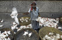 a vendor at a poultry market in India