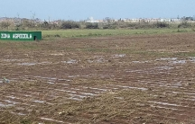 Crops were damaged in Puerto Rico