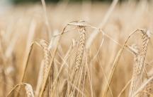 Close up of a grain.