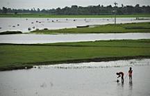 Bangladesh flooded farms.