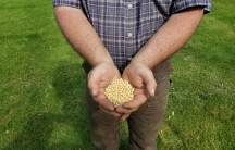 A man holds soybeans in his hands.