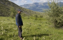 Jetmir Gjini used to grow marijuana -- lots of it. Now he and his family are back to herding sheep.