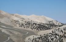 White Mountains — Pines