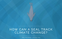 """Headline reads, """"How can a seal track climate change?"""" with an animated elephant seal"""