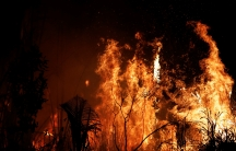 A fire burns at night in the jungle.