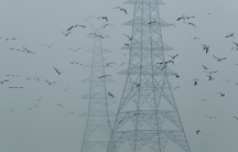 Dozens of birds are shown flying next to large electricity pylons on a smoggy afternoon.