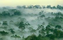 Rainforest biotic pump