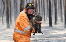 A man on an orange jumpsuit holds a koala with burned feet.