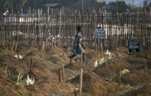 A grave digger walks past fresh graves at a cemetery in Freetown, Sierra Leone.