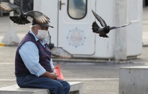 Man sits on bench with mask and bird flies overhead