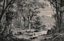 An engraving of a Peruvian forest