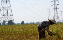 A farmer works in a paddy field under the power lines near Nam Theun 2 dam in Khammouane province inLaos, Oct.28, 2013.