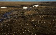 Arctic National Wildlife Refuge caribou aerial