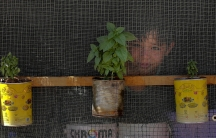Syrian boy looks through window at refugee camp with plants placed in yellow and white cans attached