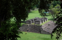 Mayan stone ruins in a field of foliage