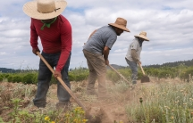 Farm workers wearing hats break up earth