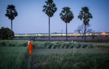 A woman walks into a rice field in northern India where farmers are using the technique known as Systems of Rice Intensification. Local officials claim the system recently produced a record rice harvest while using less fertilizer, water and seed.