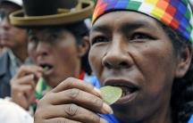 Bolivia coca leaf