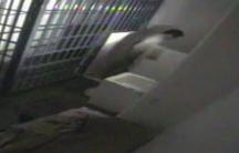 El Chapo Guzman in Mexico jail cell