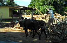 A man drives an oxcart past the rubble of what was once a traditional-style home in Unión Hidalgo, Oaxaca.