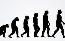 Many silhouetted figures depicting the evolution of man