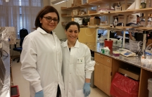 Two Iranian scientists who work at a Harvard laboratory