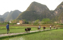 Mercury enters rice through local industrial activities and through burning coal.