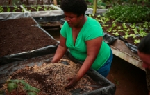 Farmer Maria Luisa Jimenez eliminates greenhouse gas emissions from synthetic fertilizers by growing vegetables in the mixture of biochar, compost, rice husks and coconut fiber.