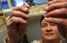 James Tran got the idea for his indoor shrimp farm on a visit back to Vietnam to visit his family.