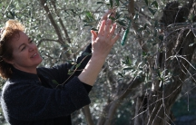 Myrta Kalampoka says investing in her olive trees saved her family from the Greek economic crisis. Now she hopes their olive oil can rescue them from an ongoing drop in tourism to Lesbos.