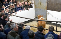 At the Camlough Cattle Mart, which serves Crossmaglen. Farmers are worried how competitive their beef will be in a post-Brexit world.