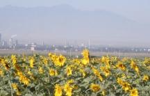 China power plant in Xinjiang