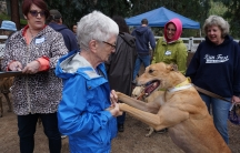 Cross-border dog adoption