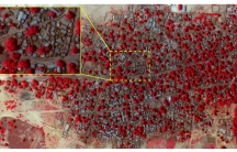 Satellite image showing the extent of damage in Doron Baga taken on January 7, 2015, following an attack by Boko Haram.