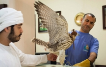 An owner picks up his falcon from the Abu Dhabi Falcon Hospital.