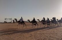 """A man leads a caravan of camels at the King Abdulaziz Camel Festival in Saudi Arabia, a monthlong extravaganza honoring the """"ships of the desert"""" and their place in the country's history."""