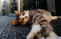 A sleepy cat in Istanbul.