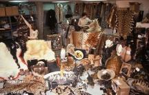 JFK wildlife collection