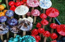 Fantasy mushrooms in many colors