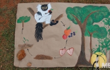 A Madagascar Biodiversity Project poster illustrates the symbiotic relationship between the black and white ruffed lemur and the forests they live in, centered on food and poop. The project aims to use lemur poop to help restore forest habitat for the ben