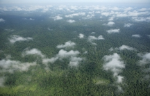 An aerial shot of Prey Lang Forest in Cambodia