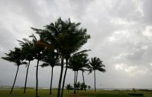 Coconut palms in Goa