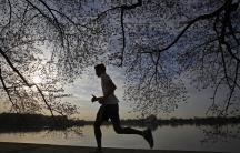 Man running under cherry blossom branches