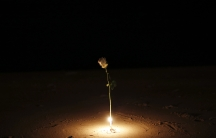 A rose is lit by a candle as survivors, local residents and visitors gather for a ceremony for victims of the 2004 tsunami in Ban Nam Khem, a fishing village destroyed by the wave. Survivors of Asia's 2004 tsunami and relatives of its 226,000 victims crie